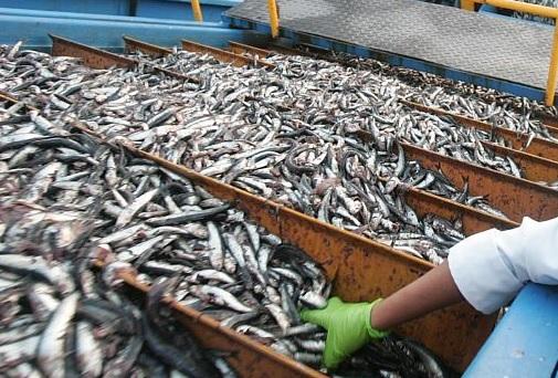 Gan m s produce aplica seis medidas para el for Ministerio de pesqueria